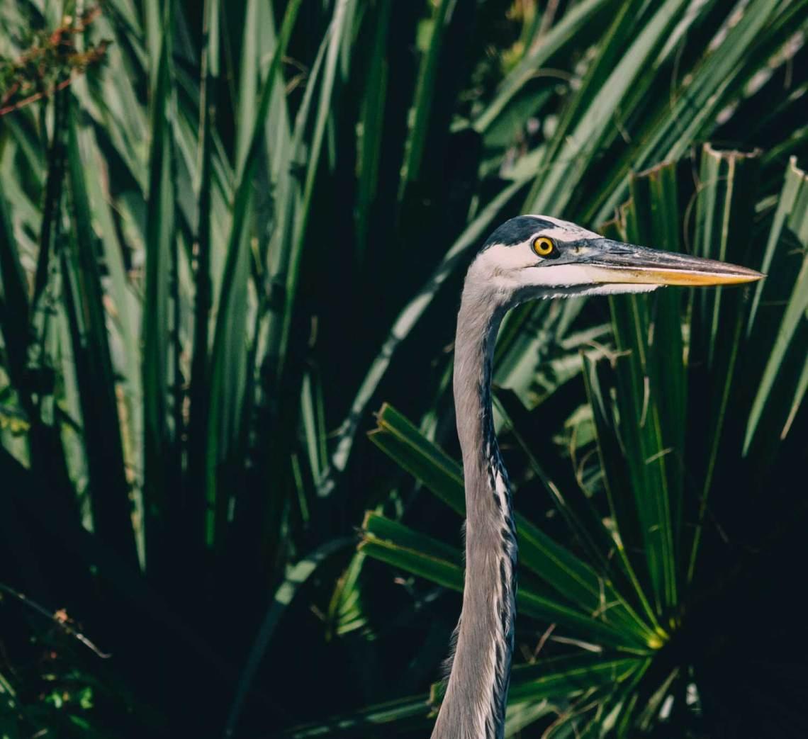 letter_for_birds_national_park_quest_8