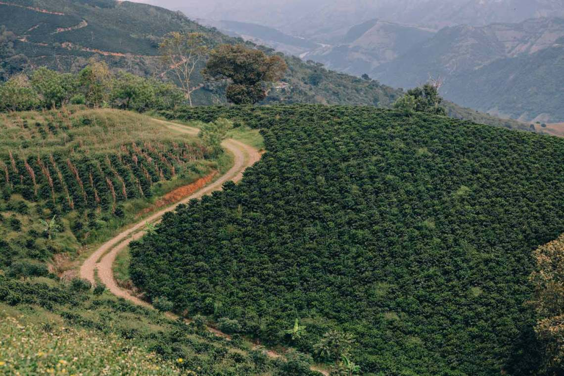 colombia_coffee_break_farm_plants