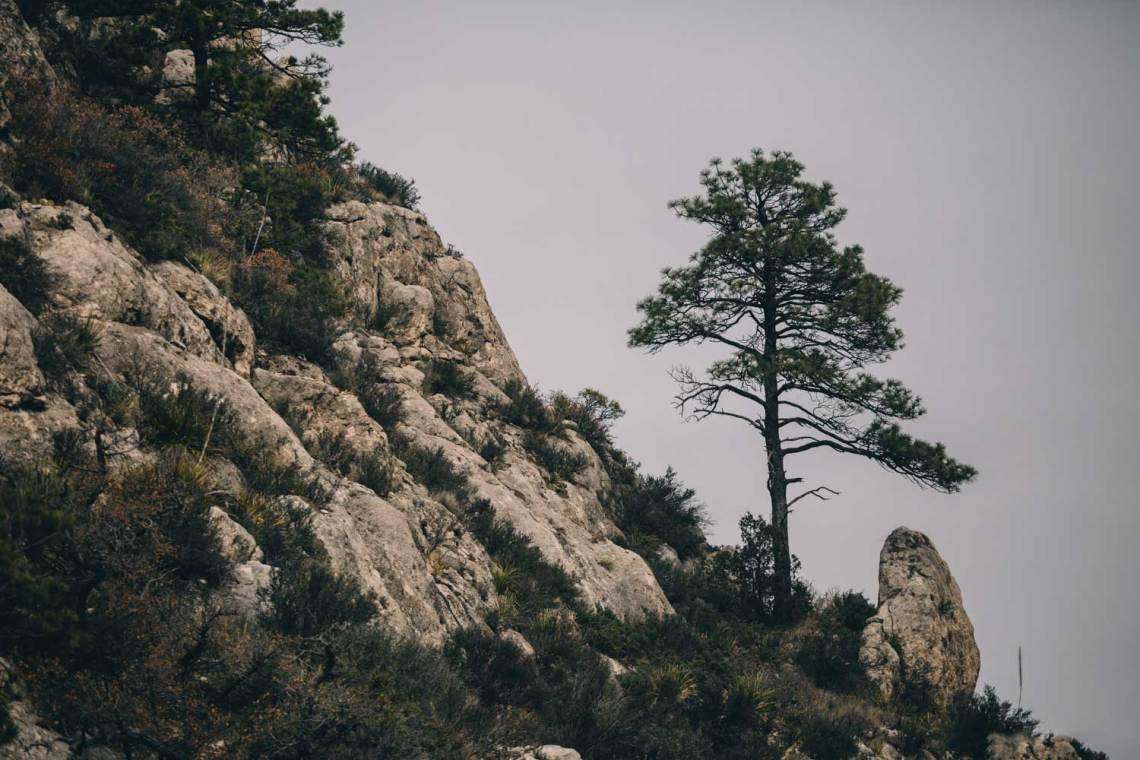 guadalupe_mountains_national_park_guadalupe_peak_trail_tree