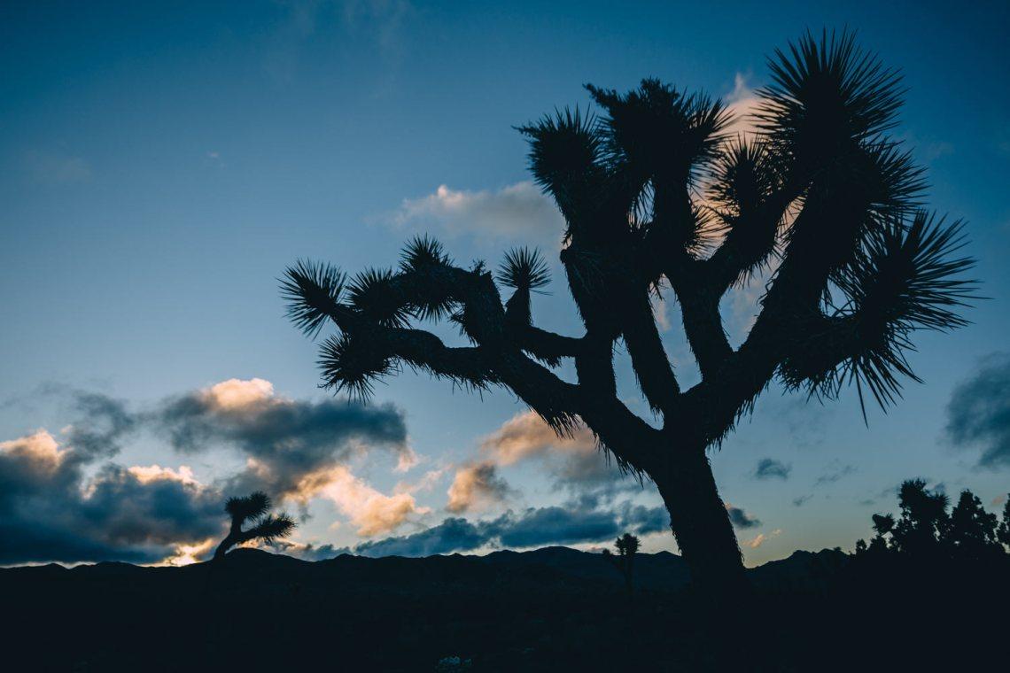 joshua_tree_meaning_tree_silohuette