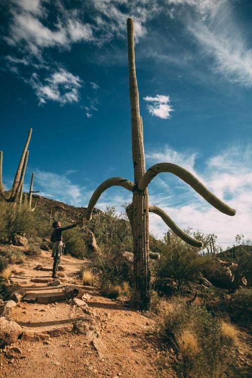 reflection_land_saguaros_greeting