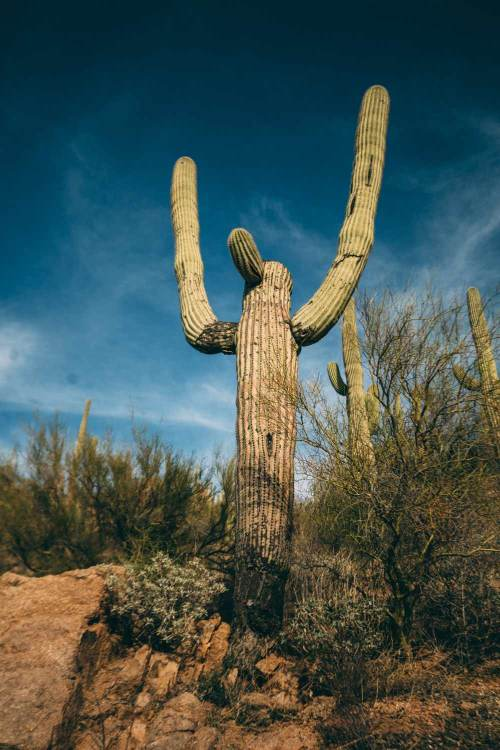 reflection_land_saguaros_national_park_hiking_saguaro_person