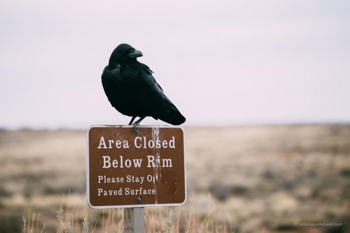 petrified_forest_national_park_voice_echo_crow