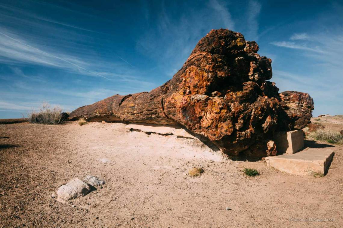 petrified_forest_national_park_voice_echo_large_tree