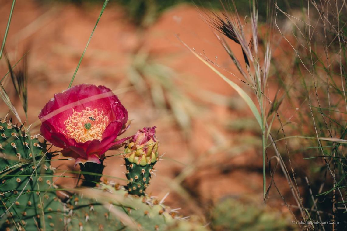 magical_trails_zion_national_park_quest_flower