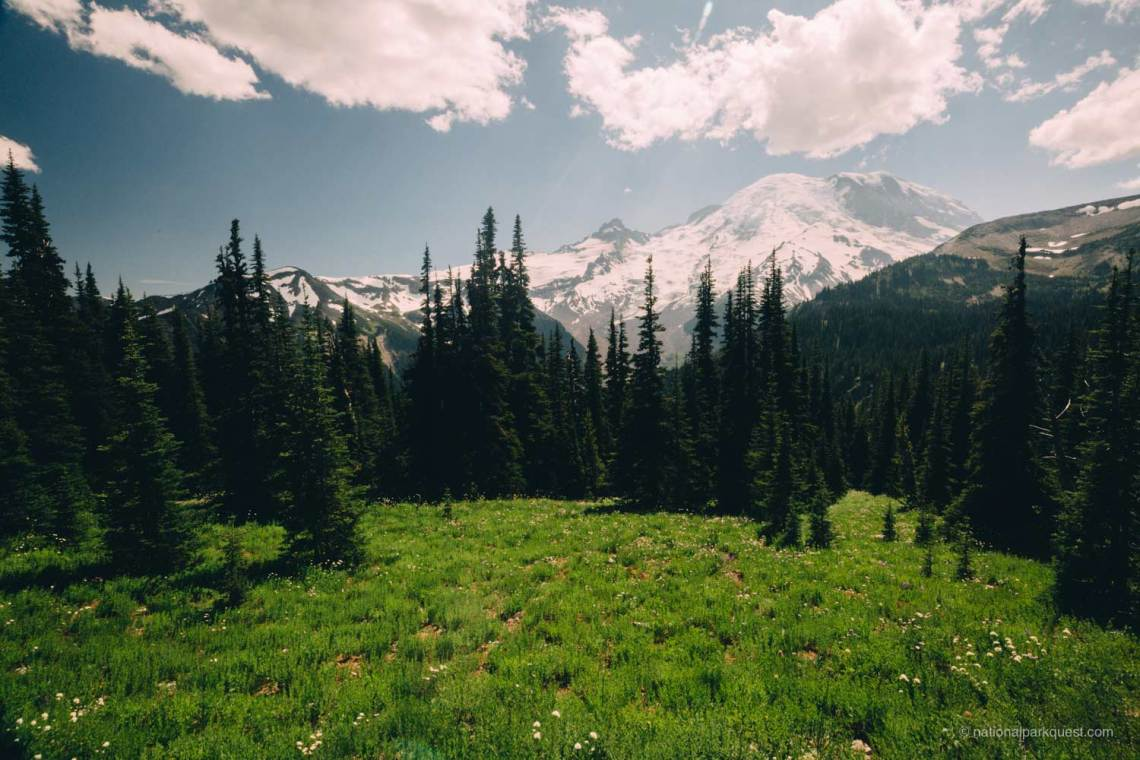 those_who_wander_in_mount_rainier_forest