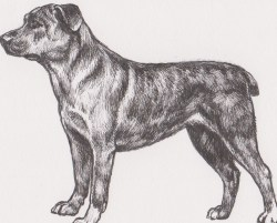 Indoor This Extinct Extinct Is That Includes Our Dog Breeds Extinct British Dog Breeds Extinct Dog Breeds And Reforeimpossible To It Even Had Its Own Pedigree Written A Drawing