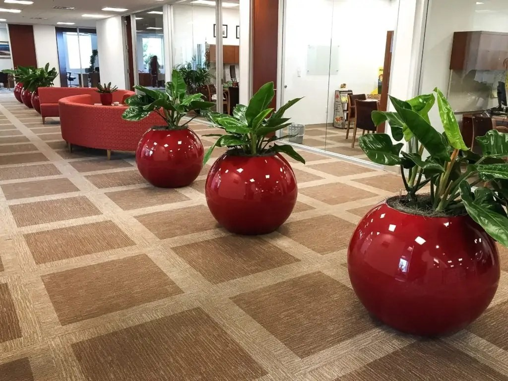 Indoor Plants For The Office Nature Sweet Plant Interscapes San Antonio Texas Indoor Plants