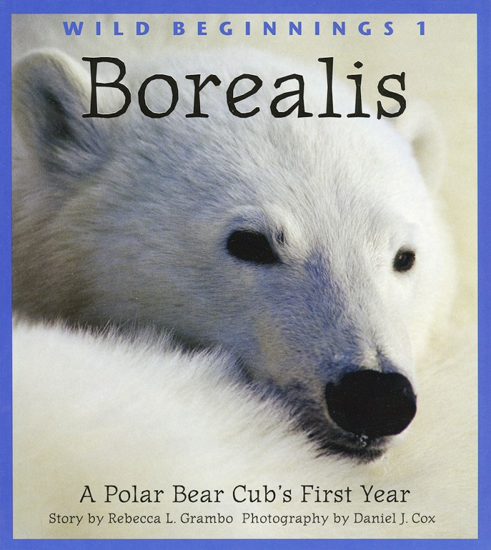 Cover of Borealis