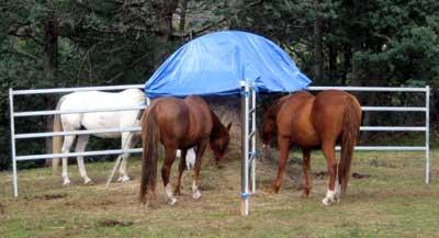 Roundbale Hay Feeding Natural Horse World