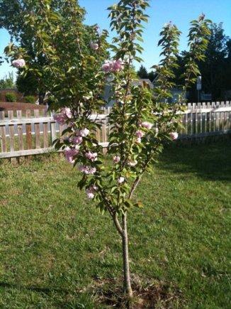 Shannon's Tree