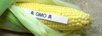 GMOs were NEVER Proven Safe, PhD Explains