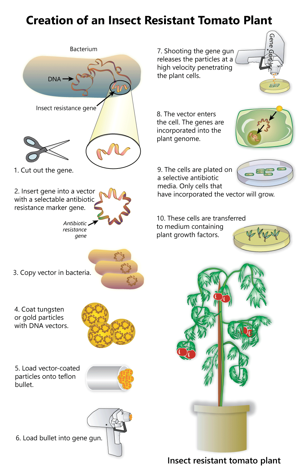 pros and cons of transgenesis This free science essay on essay: gene transfer techniques - pros and cons is perfect for science students to use as an example.
