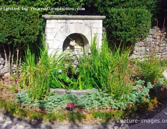 Little Aquatic Garden