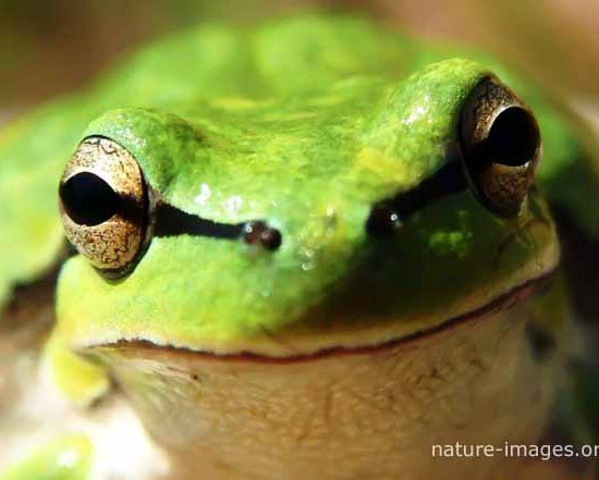 Rain Forest Frog