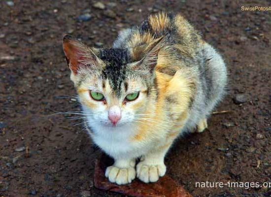 Baby Cat Photo