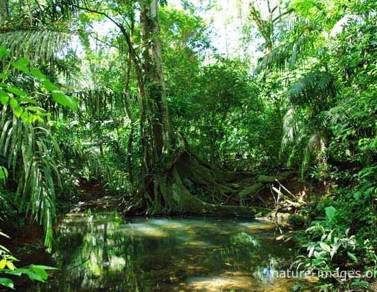 rain forest scene photo
