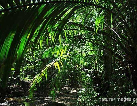 rain forest scene charco hike