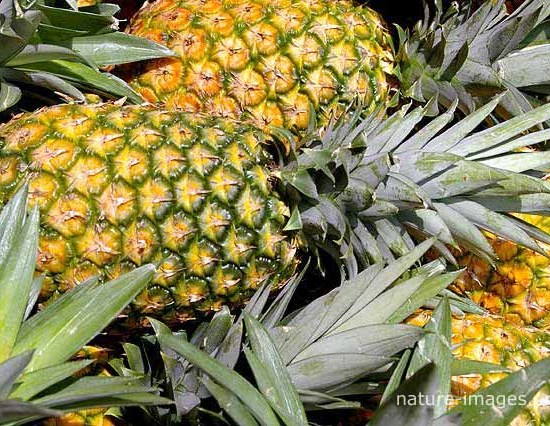 Pineapples on a fruit stand