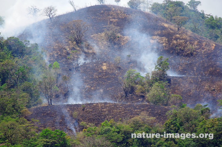 Burned trees and grass to clear land for cattle