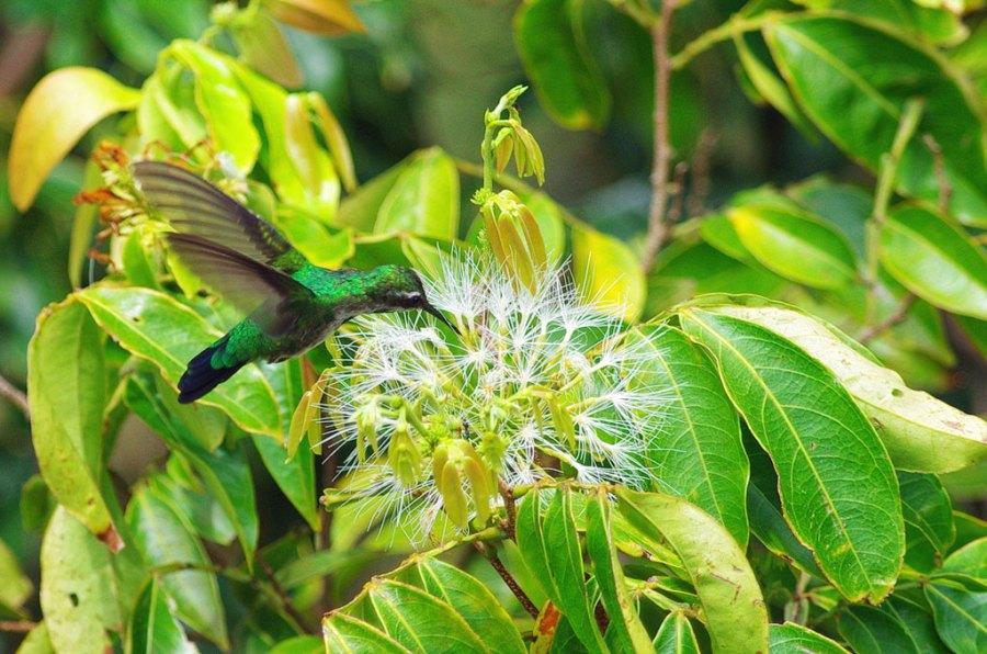Tiny Hummingbird on Tree