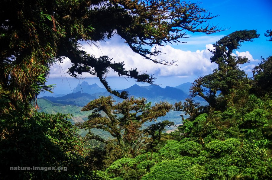 Mountain Rain Forest, some views from Altos del Maria, Panama.