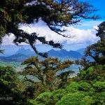 Mountain Rain Forest, some views from Altos del Maria, Panama.