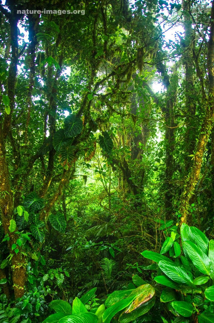 Mountain Rain Forest