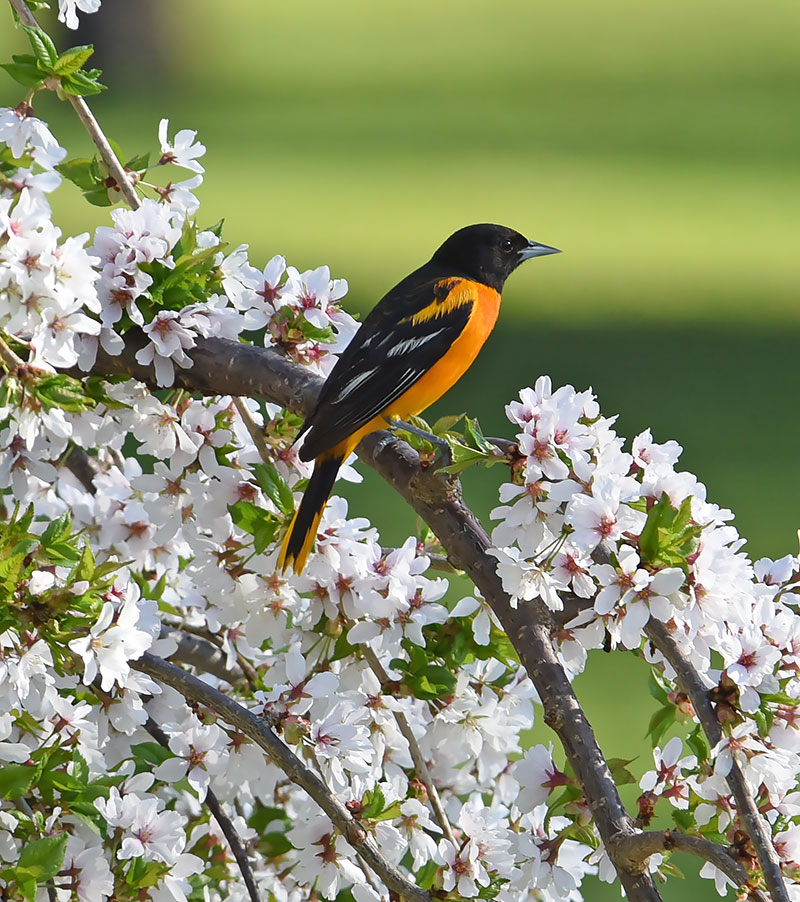 Colorful Birds of Spring Nature and Wildlife Pics
