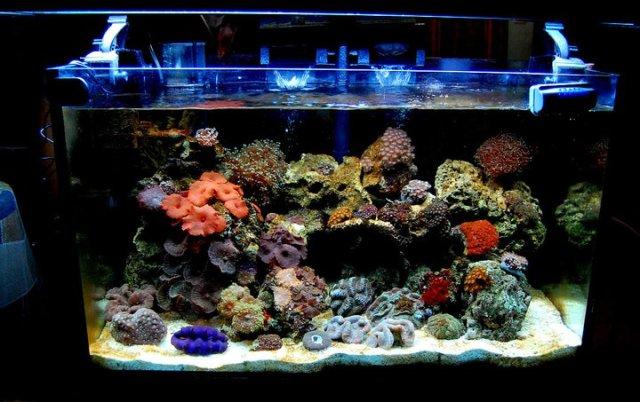 Saltwater fish tank setup marine aquarium set up easy for Well water for fish tank