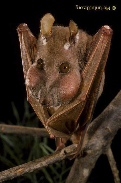 Cute Book Wallpaper Nature For My Soul Bats