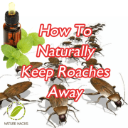 How To Naturally Keep Roaches Away