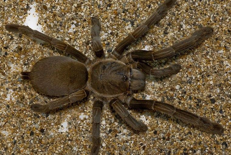 Giant, venomous, invading alien spiders… again.