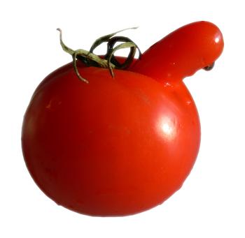 Rude tomato