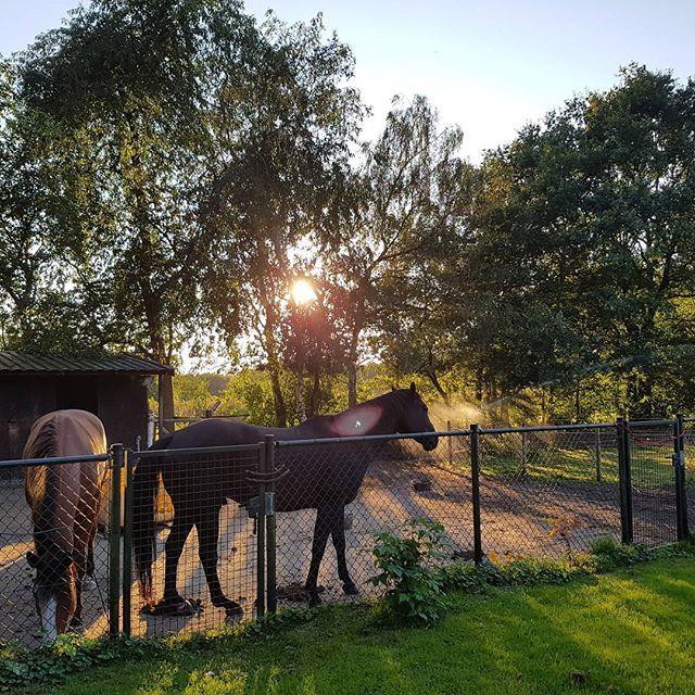natuurlijk paarden blog