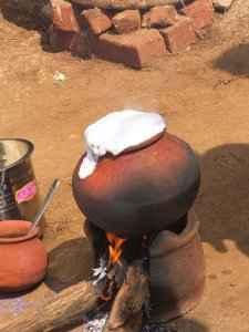 Sankranti Pongal / Milk boiling