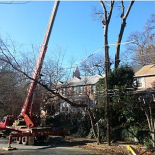 pic services tree removal