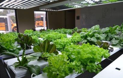 Booker Middle launches hydroponics program