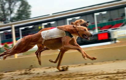 5 Florida greyhounds test positive for cocaine
