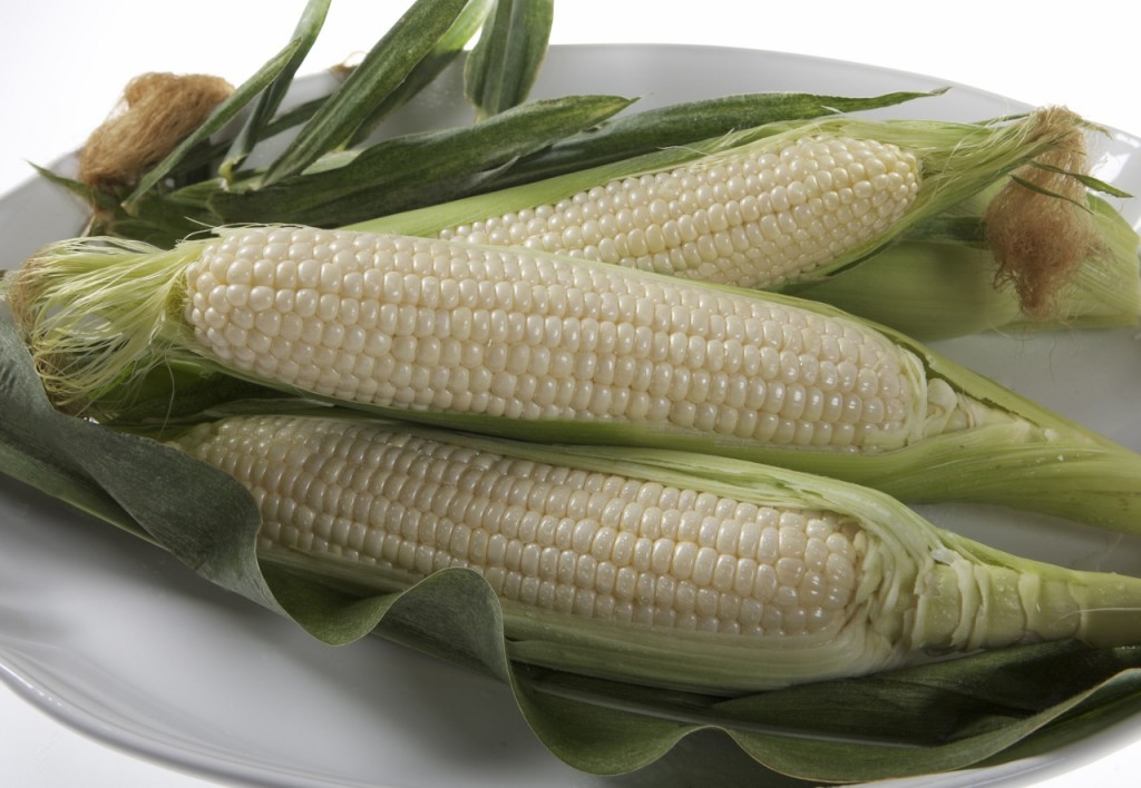 Field Corn Vs Food Corn