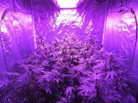BOSSLED 1600W Full Spectrum LED Grow Light | BOSSLED ...