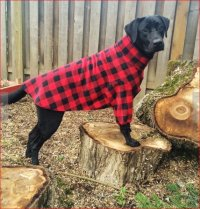 large dog clothes | Rebel Wag Custom Apparel for Dogs of ...