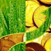 agri-money_dollars_Featured