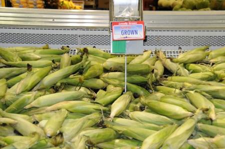 Keep Sweet Corn In Fridge