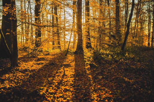 Late Fall Desktop Wallpaper Beautiful Free Stock Images Negativespace