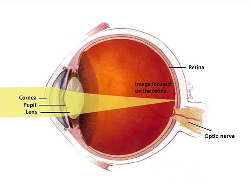 Eye Diagram Color Wiring Diagram
