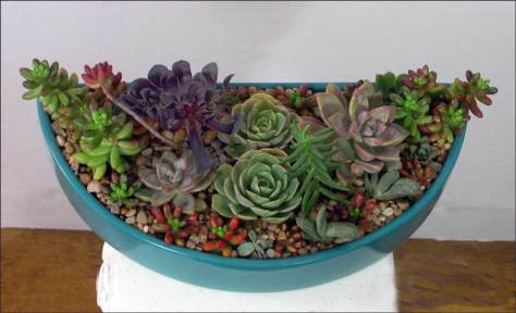 Succulents in half round container by Yukiko 2015