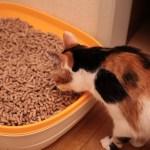 岐阜の間伐材を有効活用した猫砂「いびペレ」