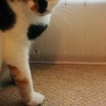 窓の冷気をシャットアウトするパネルは、猫にも快適
