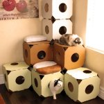 積み上げるごとに要塞化する、段ボール製猫ハウスモジュール